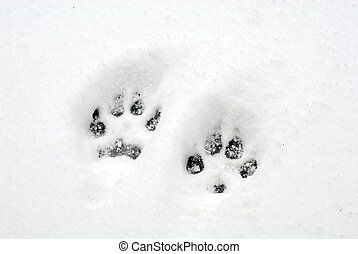 Dog Pawprints - double dog pawprints in fresh snow