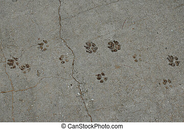 dog paws animal tracks