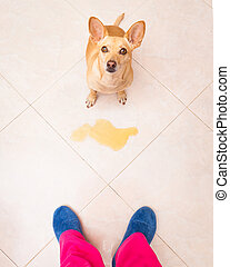 dog pee owner at home