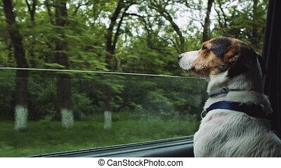 Dog peeking in from the open window of the car.