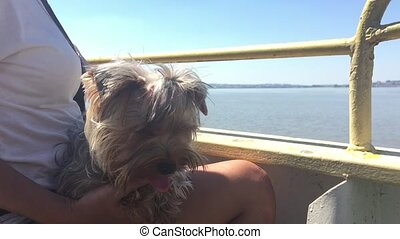 dog pet sits on the hands of a woman swims on a ship on the deck on the water slow motion video