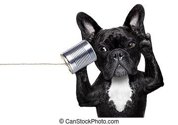 dog phone telpehone - french bulldog dog listening or ...
