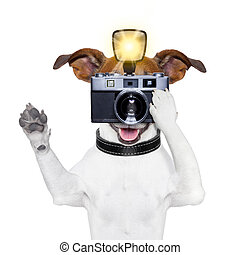 dog photo - dog taking a photo with an old camera and ...