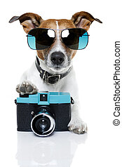 dog photographer - dog taking pictures with a fancy photo...