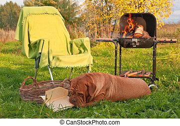 dog, picnicing