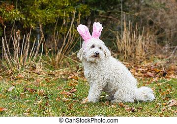 Dog pink bunny ears