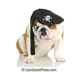 dog pirate - pirate - english bulldog wearing pirate costume...