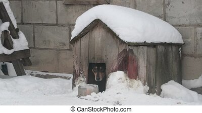 dog pities out of his booth in the winter.