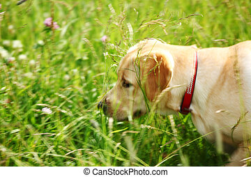 dog play in grass