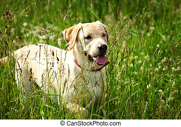 dog play in grass - happy dog play in green grass