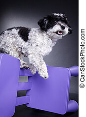 dog playing in photo studio