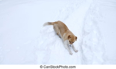 Dog playing in snow in winter mountains