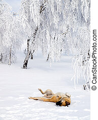 Dog playing in snow.
