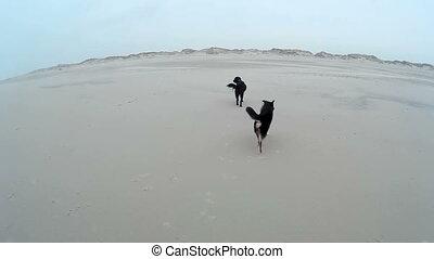 Dog playing on a Beach