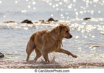 Dog playing on seashore