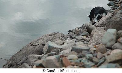 Dog playing on the lake