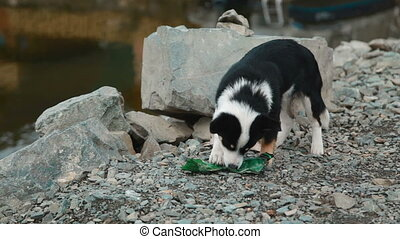 Dog playing with a bottle on the shore of Lake