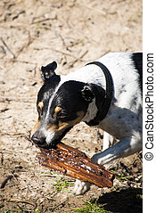 Dog playing with a stick in the field