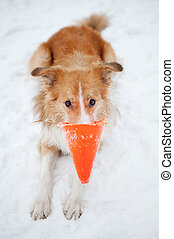 dog playing with cone toy