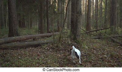Dog playing with stick in the forest