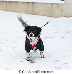 Dog plays in the snow