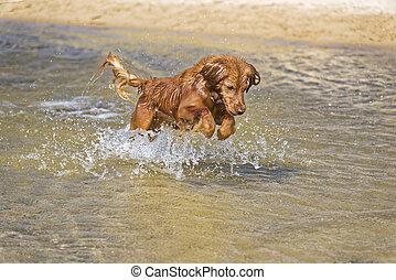 Dog Plays on the Beach
