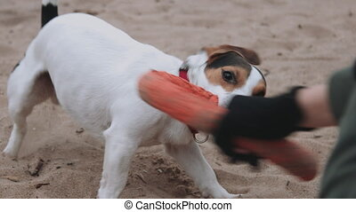 Dog plays with a toy on the beach