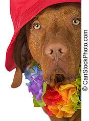 dog portrait wearing a hat