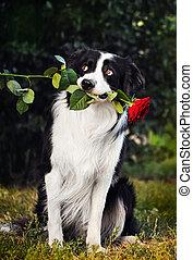 Dog portrait with flower