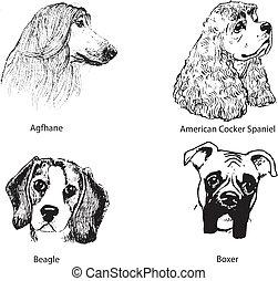 Dog portraits. -  breeds