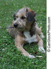 Dog posing in the grass