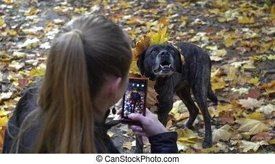 dog posing to its owner when she making picture of a dog in autumn leaves