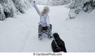 Dog pulling woman in sled