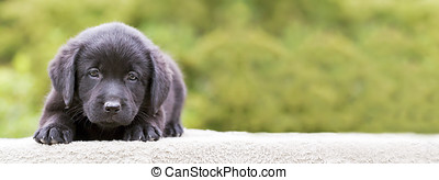 Dog puppy banner - Website banner of a cute dog puppy