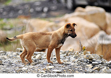 Dog puppy on the rocky ground