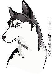 Dog. Puppy Siberian Husky. vector illustration. Portrait of a young blue-eyed Siberian Husky.