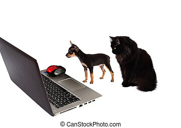 Dog puppy with  cat in front of a laptop isolated on white backg