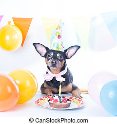 Dog, puppy with happy birthday cake ,a party hat. Birthday card, square