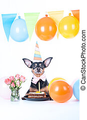 Dog, puppy with happy birthday cake ,a party hat. Birthday card, vertical