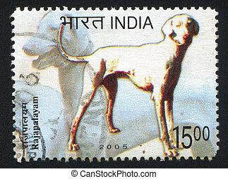 dog Rajapalayam