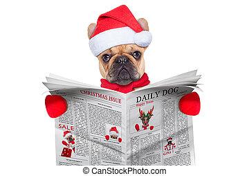 dog reading newspaper - french bulldog dressed as santa...
