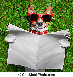 dog reading newspaper - dog reading a blank newspaper and...