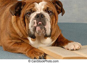 dog reading novel