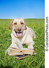 dog reading rules from a book