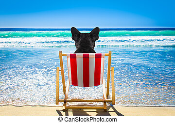 dog relaxing on a beach chair