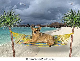 Dog resting in hammock on beach