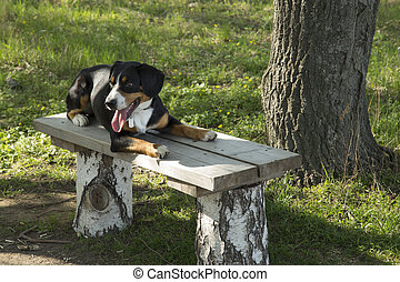 Dog Resting on a Wooden Bench