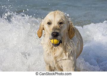 Dog retrieving a ball