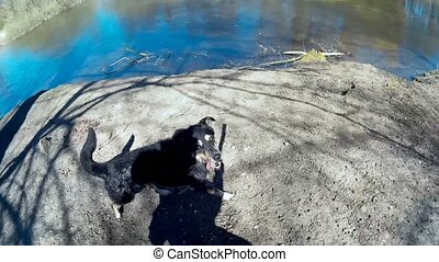 Dog retrieving a Stick out of the Water