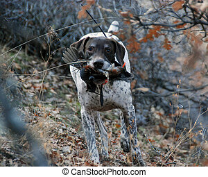 Dog retrieving bird